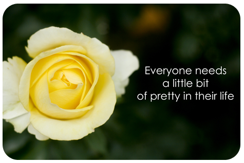 Little-bit-of-pretty