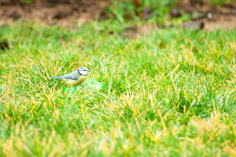 The Wednesday Window on Callaloo Soup - Bird Watching