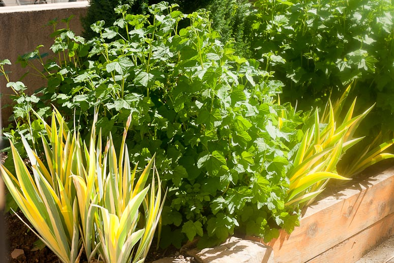 May Day at Callaloo Soup Blog-6