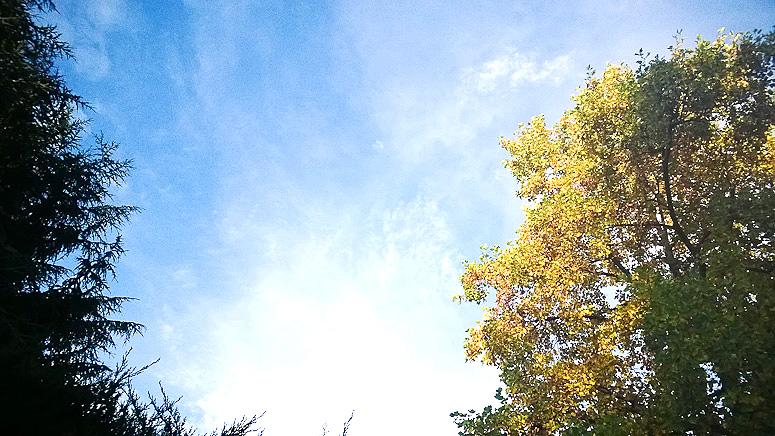 Fall 2013  at Callaloo Soup -2 copy