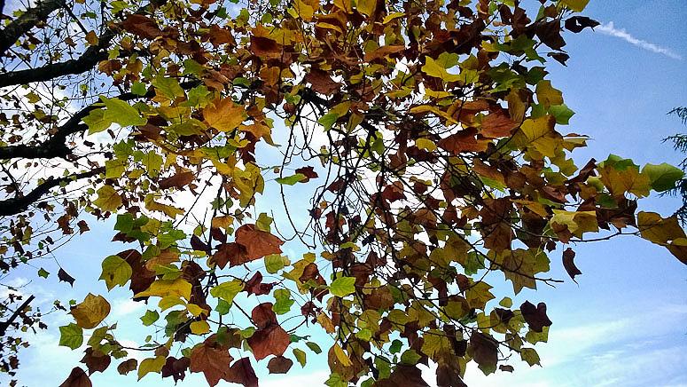 Fall 2013  at Callaloo Soup -5 copy