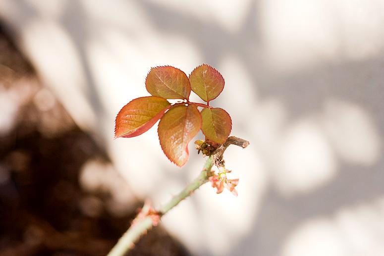 Signs of Spring at Callaloo Soup-4 copy