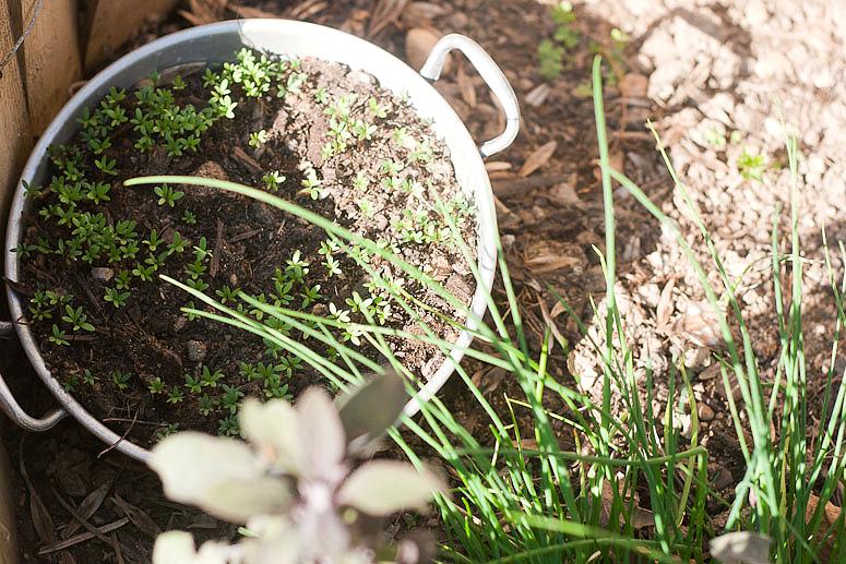 The Garden Report at Callaloo Soup-2
